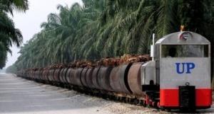 UIE – Dansk miljøvenlig palmeolie med sidegevinst